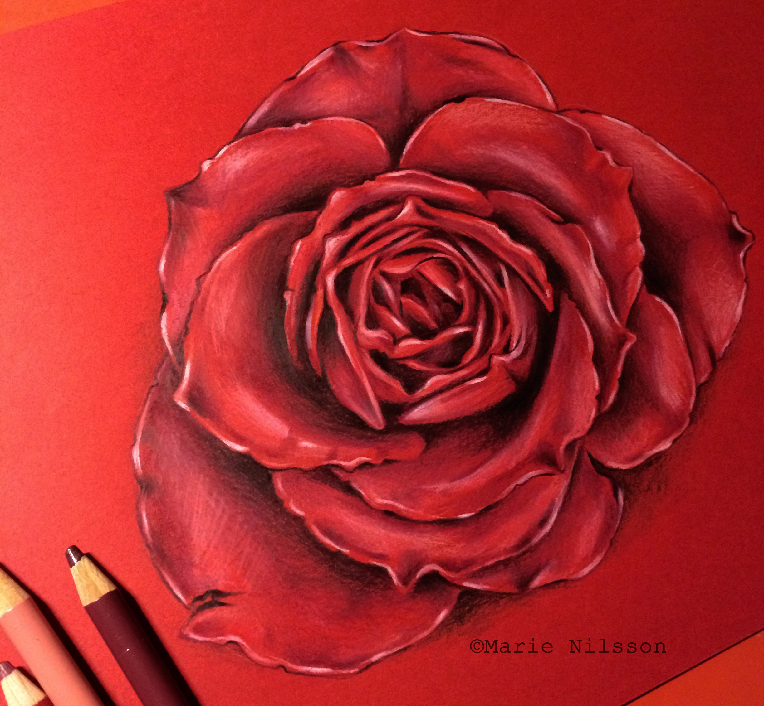 knumathise: Realistic Red Rose Drawing Images