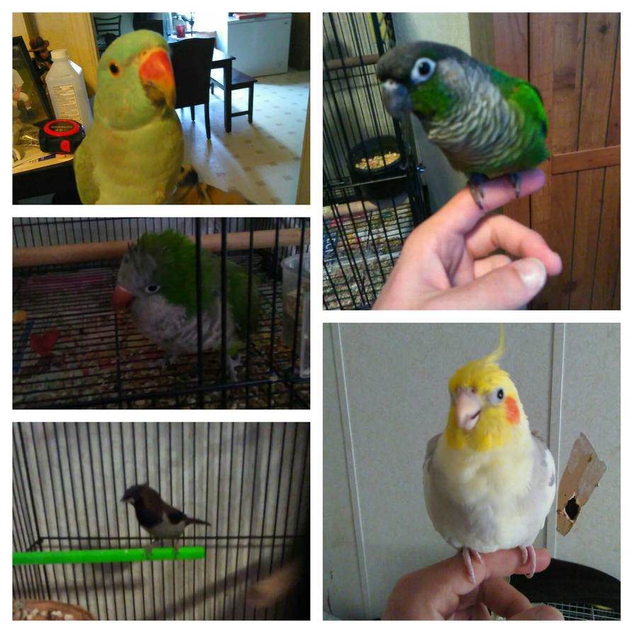 All my birds by MOTLEYLOMBAXCRUE666