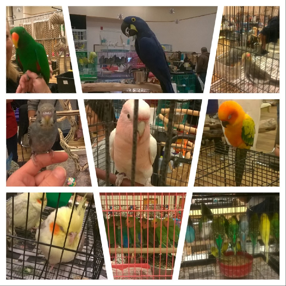 Bird expo! by MOTLEYLOMBAXCRUE666