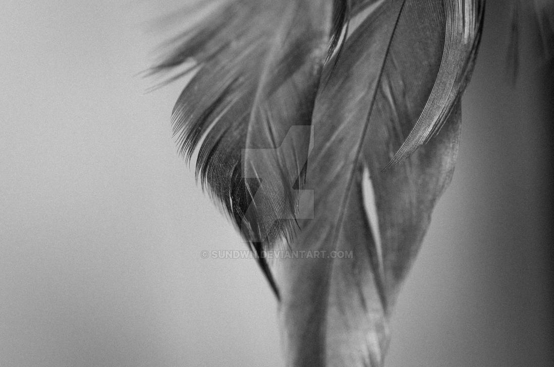 Feathers by SunDwn