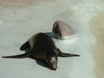 Seal by Flusswind