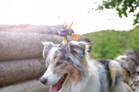 Spyro the dog-riding-dragon
