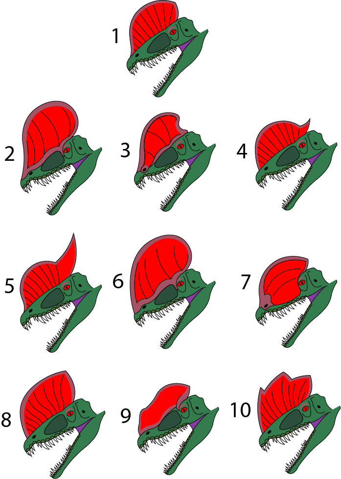 Dilophosaurus Head Designs