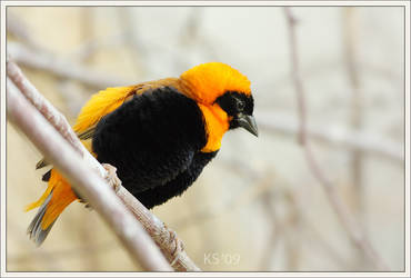 Spark of Life by siskin