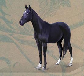 Horse Portrait Commission 1