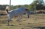 Equine Stock 33