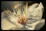 _Spring_1_