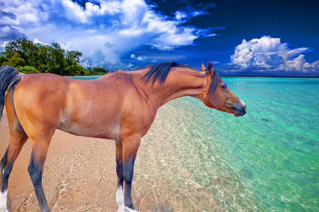 Horse on a Beach by DimrillDale-236344