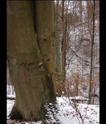 Some tree.