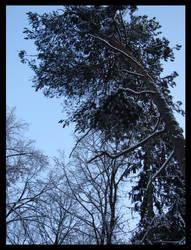 Winter 5.
