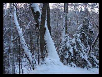 Winter 6.