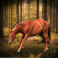 Horse Eden Premade by HEEVelveteen