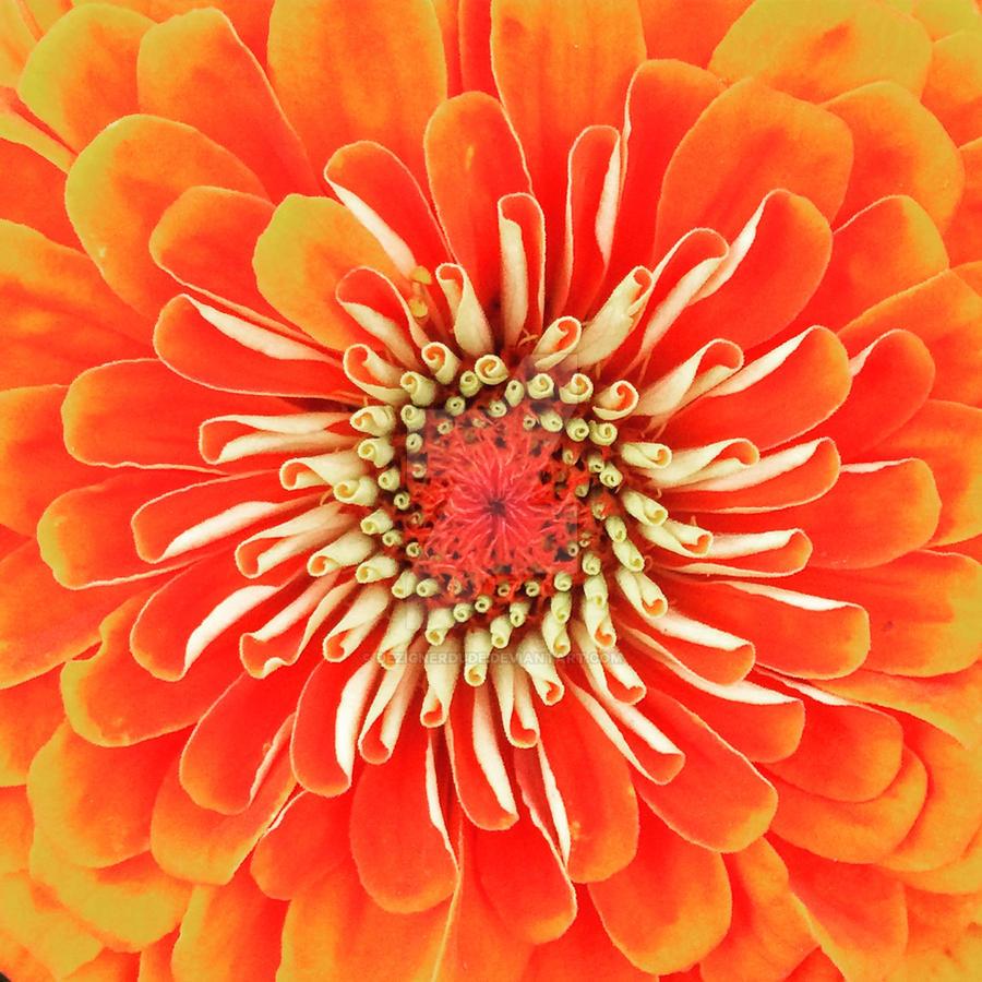 Portland Orange - Deep Carmine Pink Shades by DezignerDude