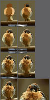 The little angry bird: step by step tutorial