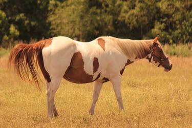 Horse Stock 3 by therainbowbrain