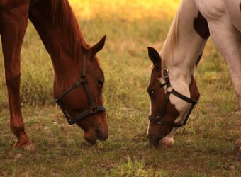 Horse Stock 8 by therainbowbrain