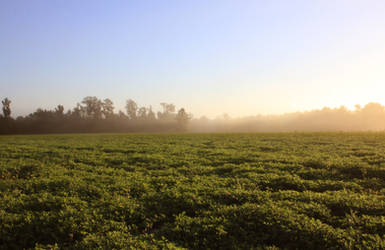 Morning Field Stock 2 by therainbowbrain