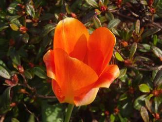 Orange single by TheBagxter