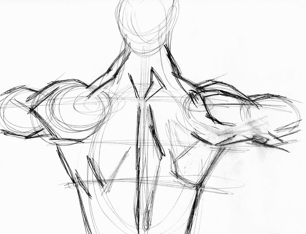 body study   male back   muscles by 0l50nj4 on deviantart