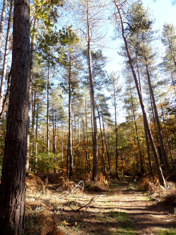 031 - Automn's forest by mcgs