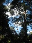 Buderim Rainforest: Sky
