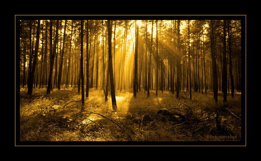golden rays by EYELIGHTZONE