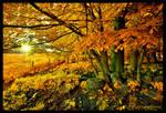 ... fall in may ...