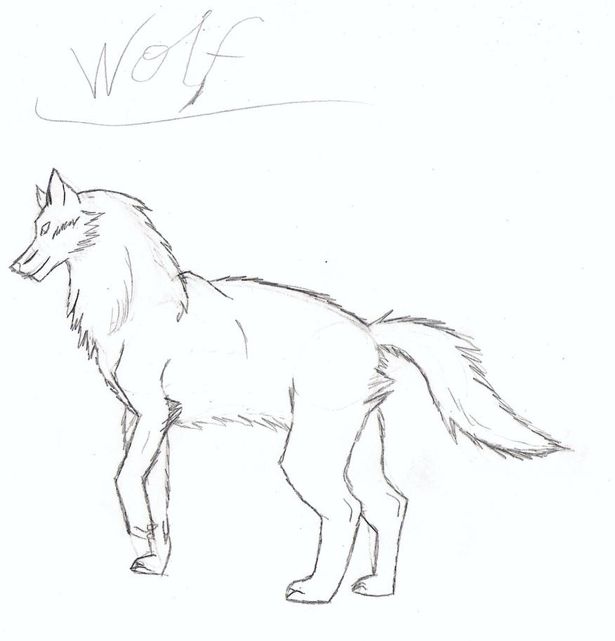 My Wolf Drawing by Bel...