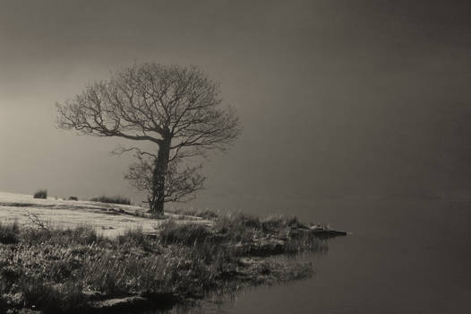 Tree by Crummock