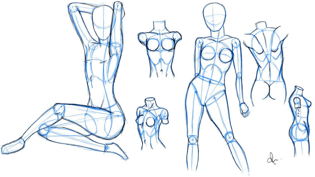Female Anatomy 1 by rasikaCart on DeviantArt