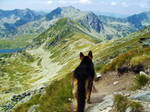 GermanShepherd on the mountain
