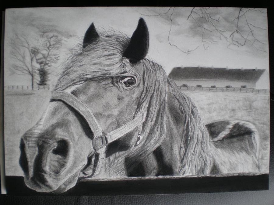 Visualizza post pedrocchio for Cavallo disegno a matita