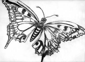 Butterfly by CeriseSunset