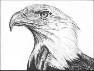 Eagle by mateusornelas