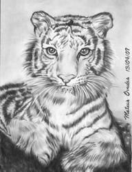 Little Siberian Tiger by mateusornelas