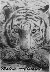 Tigre by mateusornelas