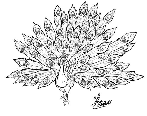 Line Drawing Of Peacock : Line art peacock by triblurr on deviantart