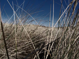 Betweens the dunes by graf-zahl
