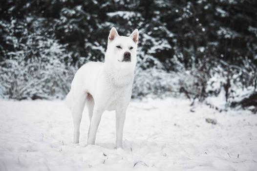 Snow Hana