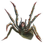 Phase Spider