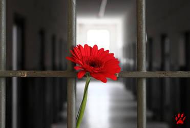 Jail Flower
