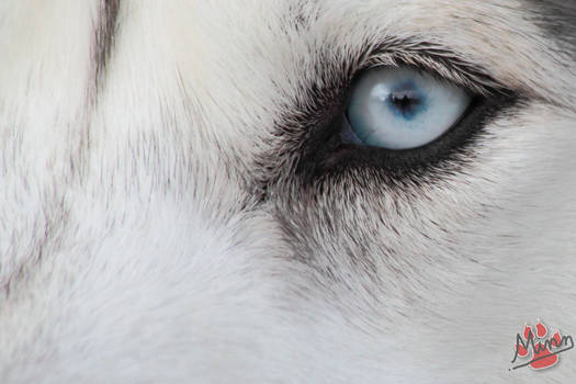 Blue Husky Eye V2