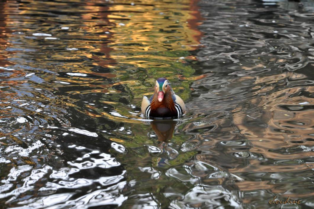 ugly duckling by little-arrow