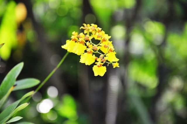 yellow by little-arrow