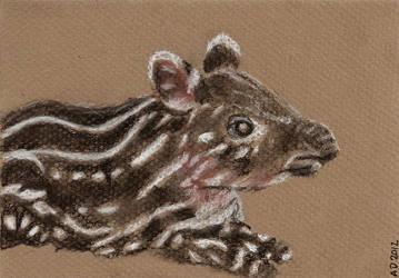tapir by ypnogatis