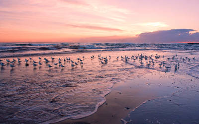 Seagulls at dawn by SxyfrG