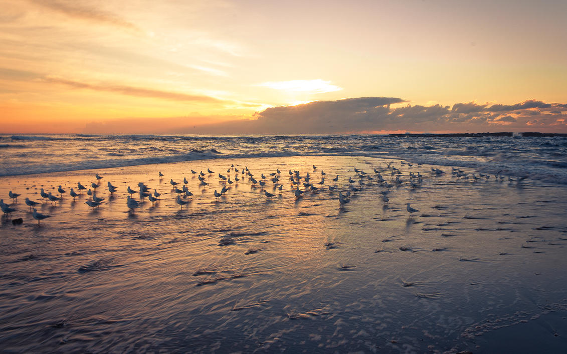 Seagulls on Longreef Beach by SxyfrG
