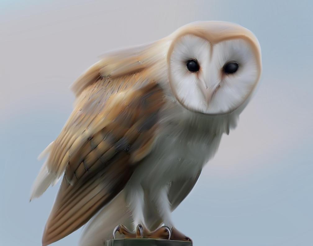 Realistic barn owl art