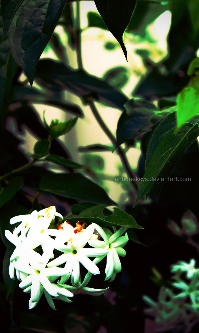 White Fragrance by AntiqueKeys