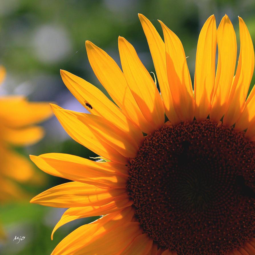 Rising sun by amiejo